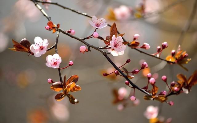 Как выбрать доступные (бюджетные) курсы в учебном комбинате (упк) флористов.